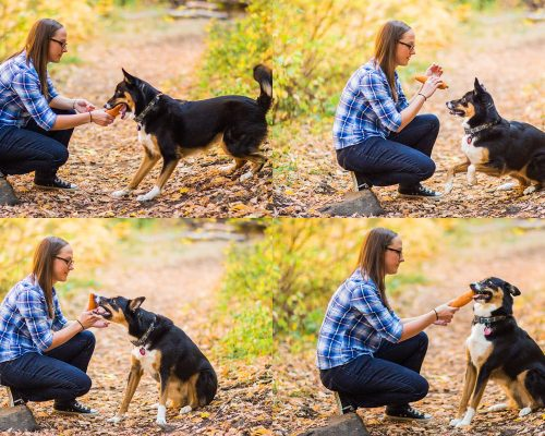 Megan & Sterling {Salt Lake City Pet Photographer}